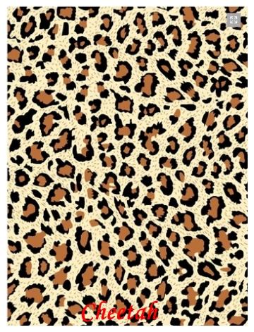 27-cheetah